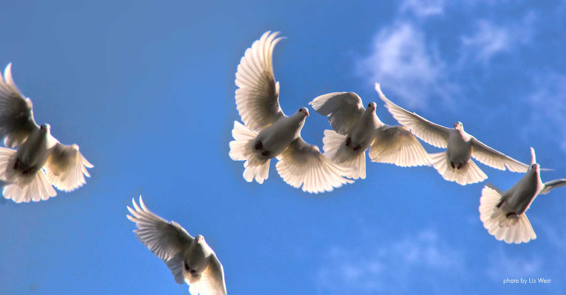 doves by liz west